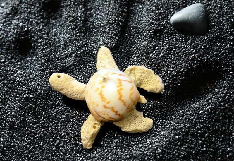 Die kleine Muschelschildkröte erinnert mich an Bali und seine Schildkröten