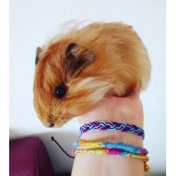Rettet die Haie - Multi-String Armband