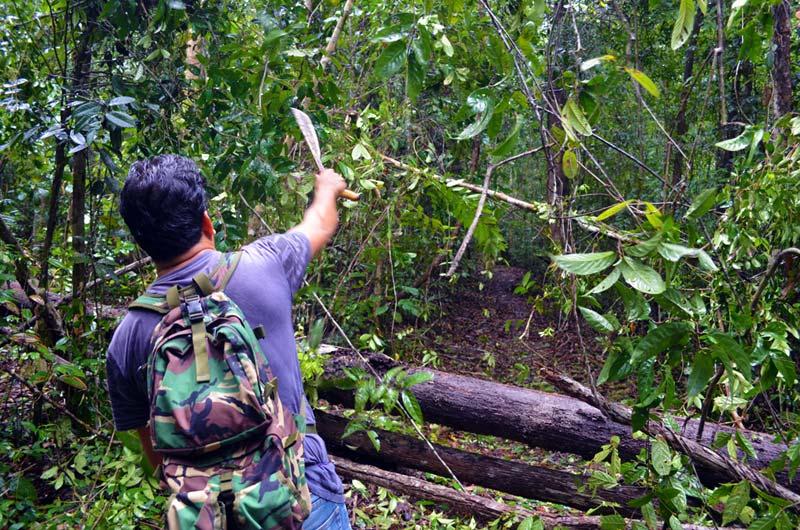Anang bahnt uns mit seiner Machete einen Weg durch das Dickicht des Urwalds