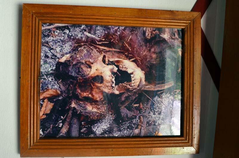 Bild von Überresten eines verbrannten Orang-Utans im Besucherzentrum von Camp Leakey