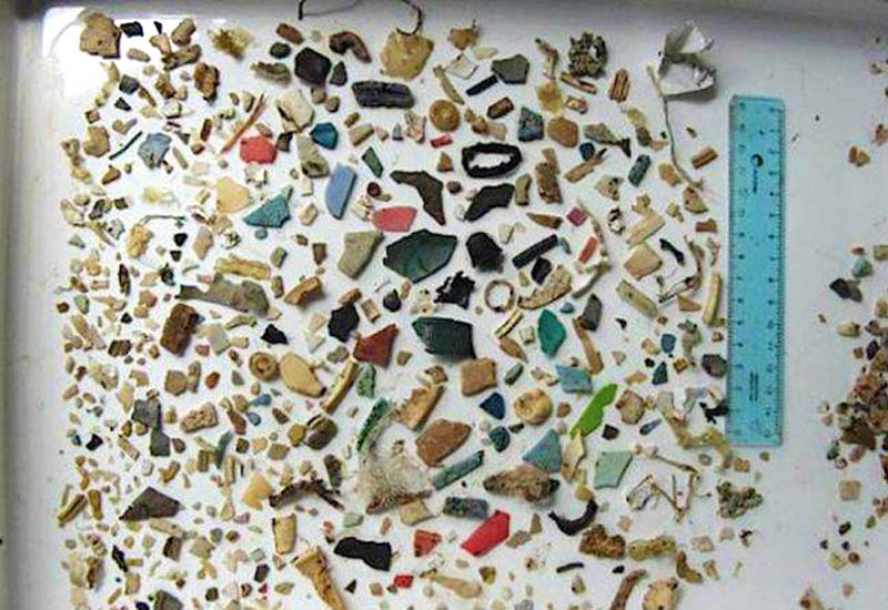 Mageninhalt einer verendeten Meeresschildkröte bestehend aus Plastik (c) OCCUPYFORANIMALS